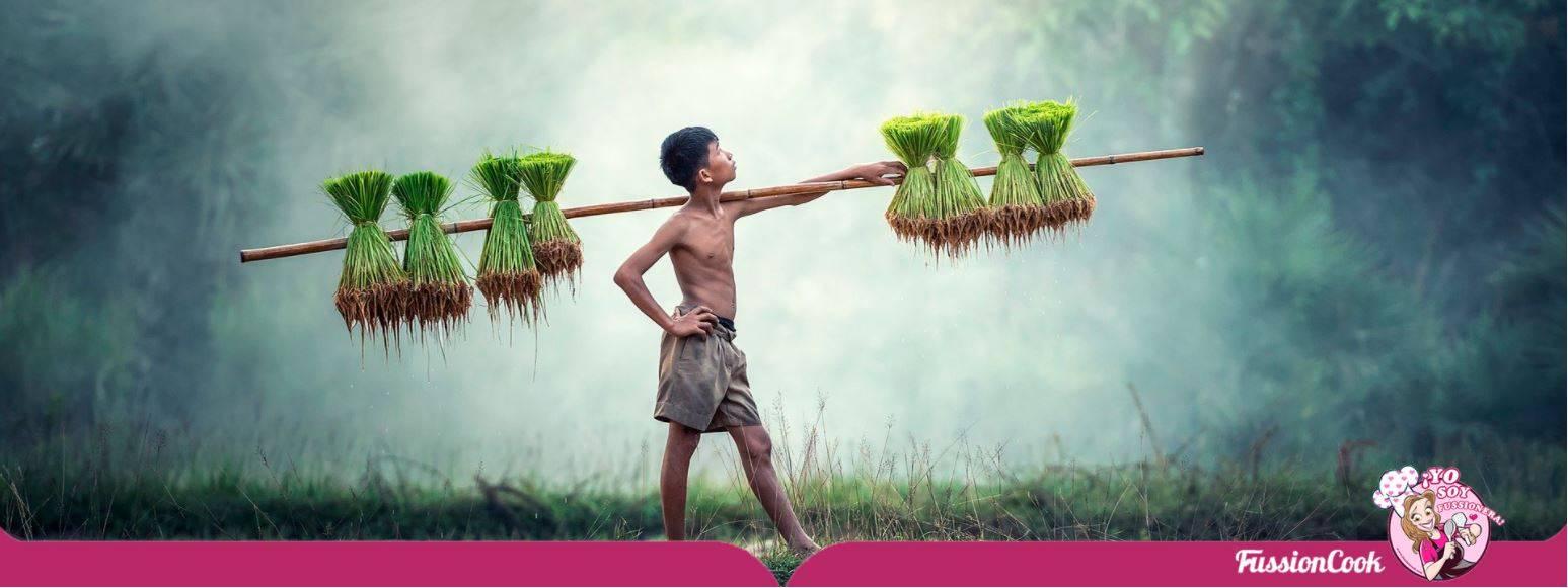 Niño chico cultivando arroz.