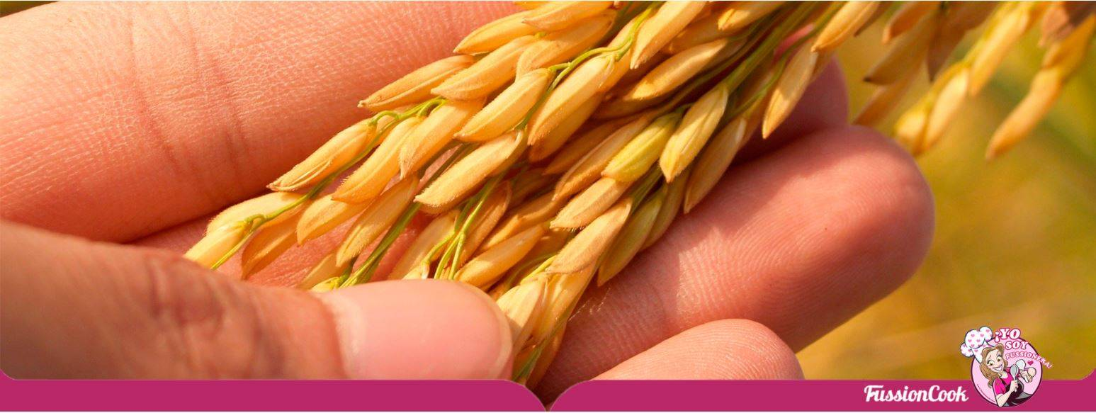 Información sobre las propiedades del arroz.